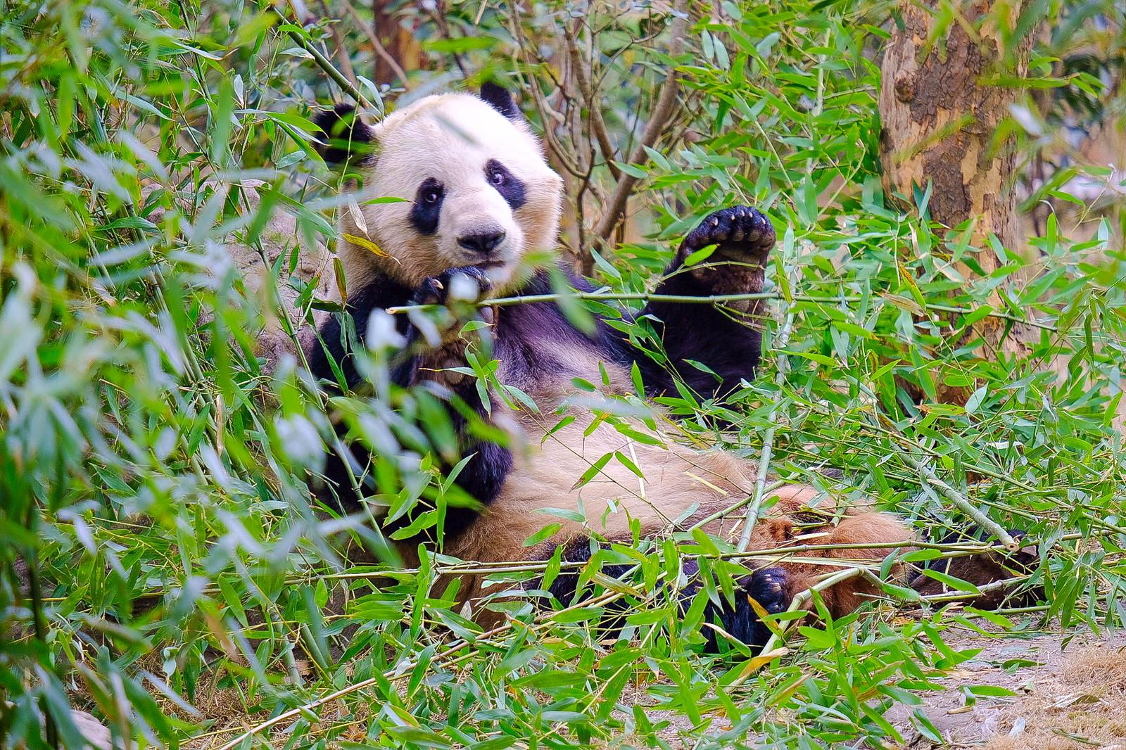 Panda Tour Utat Viaggi