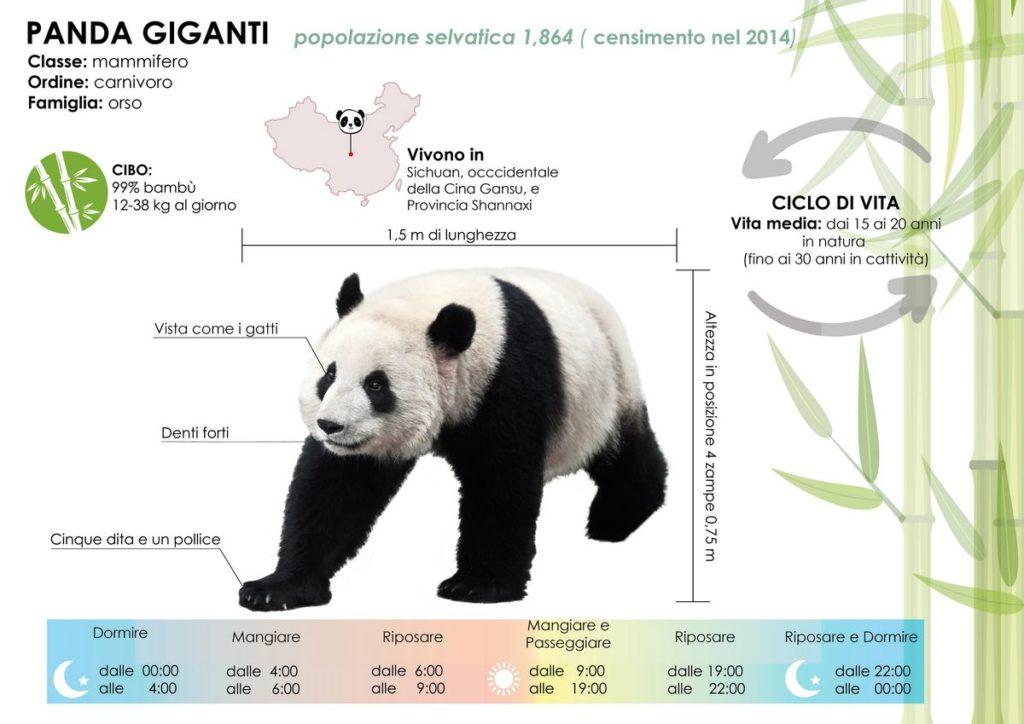 caratteristiche panda gigante